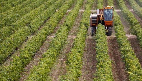 Καστοριά: 14.000€ για κάθε αγρότη στο νέο πρόγραμμα «Ανάπτυξη Μικρών Γεωργικών Εκμεταλλεύσεων»